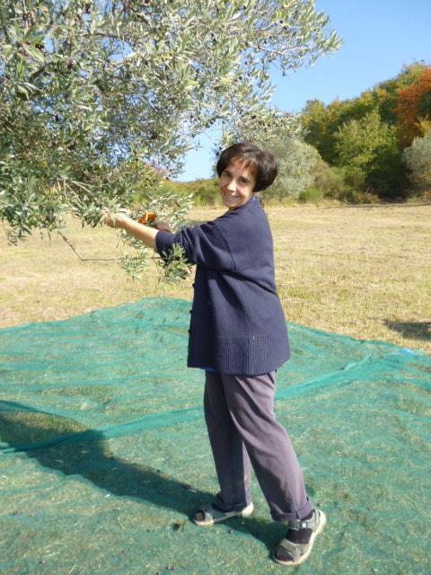 Letizia harvesting olives