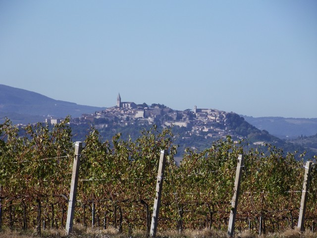 Todi and the vines